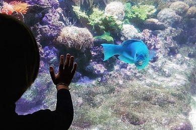 acquario-di-genova